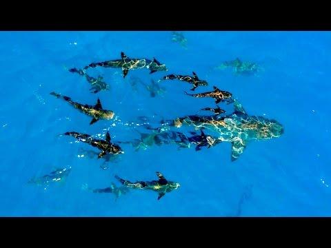 Fishing for Cobia on Bull Sharks - ft. Layne Norton - 4K