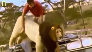 Documental de Leones   León Corre por su Vida   National Geographic Documentales