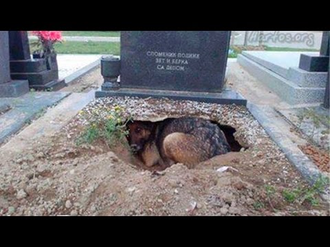Top 8 Most Loyal Dogs In The World