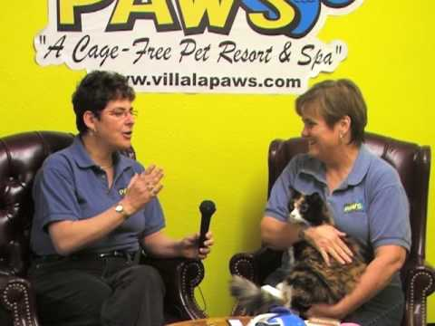 Villa La PAWS - Grooming Cats (Part 1)