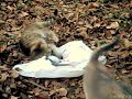 Crazy Cats Fight Funny Cats Are Struggling Funny Amazing Funny ...
