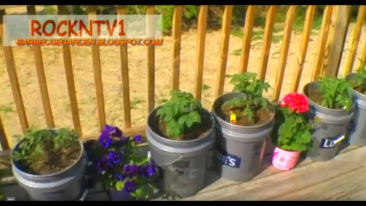 Grow tomatoes in 5 gallon buckets youtube for Gardening 5 gallon bucket