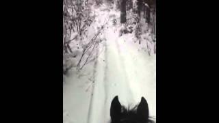winter riding Western Sugar APH