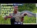 [WILD FISHING] GAMBUT MARKAS KEPALA ULAR | JEJAK PETUALANG (25/04/18) 2-3