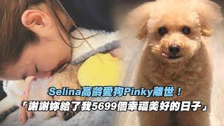 Selina高齡愛狗Pinky離世!  「謝謝妳給了我5699個幸福美好的日子」