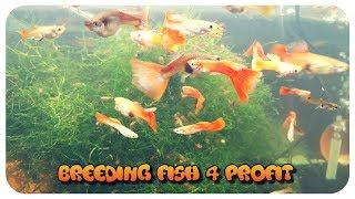 L.R. Bretz's Aquatics Fish Room Tour! Shrimp Breeding! Rainbowfish!
