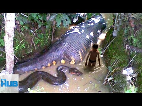 10 Mysterious Creatures Spotted In The Amazon