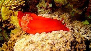 Mar Rojo Sur
