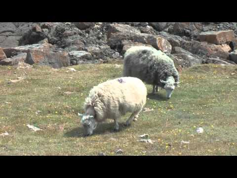 A Walk To Mewslade and Fall Bay Rhossilli Gower Peninsula Swansea South Wales