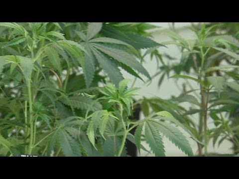Pot legal nationwide in 5 years?