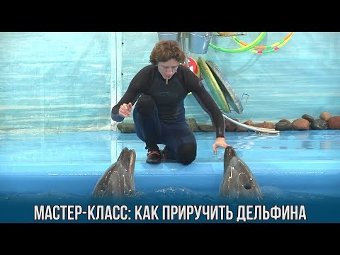 Мастер-класс: как приручить дельфина