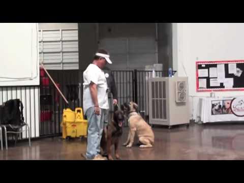 Fastest Dog Training Method video