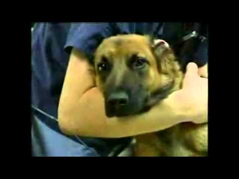 ASPCA Animal Cruelty Commercial. Very Sad :( (Sarah McLachlan...