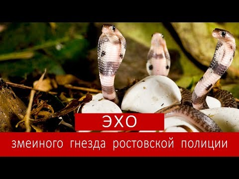 ЭХО ЗМЕИНОГО ГНЕЗДА РОСТОВСКОЙ ПОЛИЦИИ | Аналитика Юга России