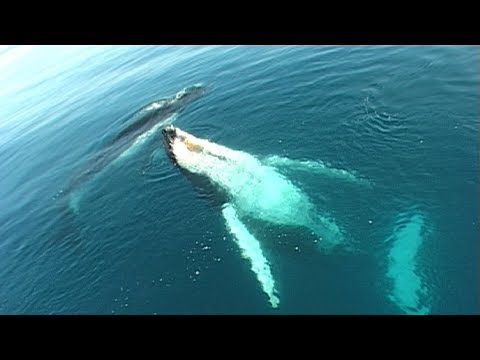 Migaloo the White Whale Speaks