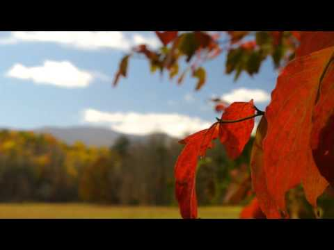 Autumn in Cades Cove. Great Smoky Mountains