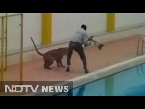 Spotted: Leopard strolling around Bengaluru school on Sunday