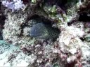 9 Aug: Eel beside anemone & fish, off coast of Tokashiki, Keramas, Okinawa, Japan