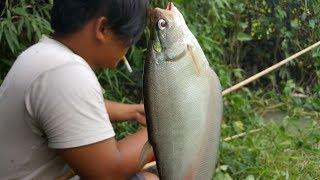 Lội suối đi câu mấy con cá này - câu cá giải trí