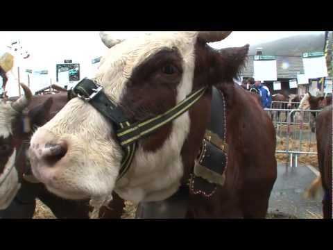 Concours Bovin 2012 à Châtel: le reportage
