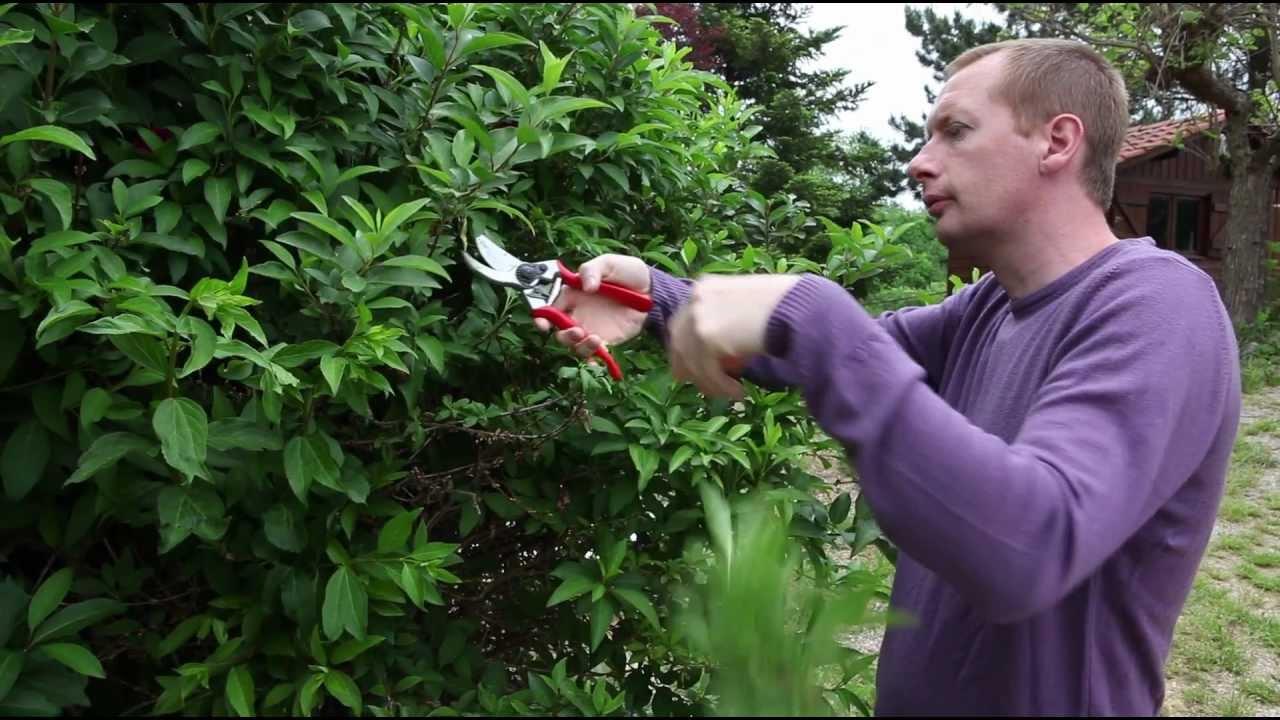 Comment et quand tailler le forsythia youtube - Quand tailler les abricotiers ...