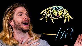 How Many Spiders Do You Swallow in Your Sleep? | Because Science Live!