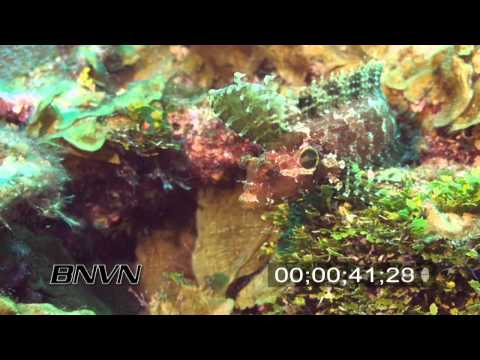 7/21/2007 Quillfin Blenny stock footage