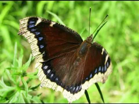 Butterflies of Guelph, Ontario.