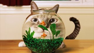 Cuties Cats  and funny video animals