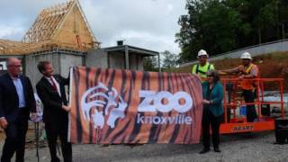 Zoo Knoxville Gets New Tiger for Tiger Forest