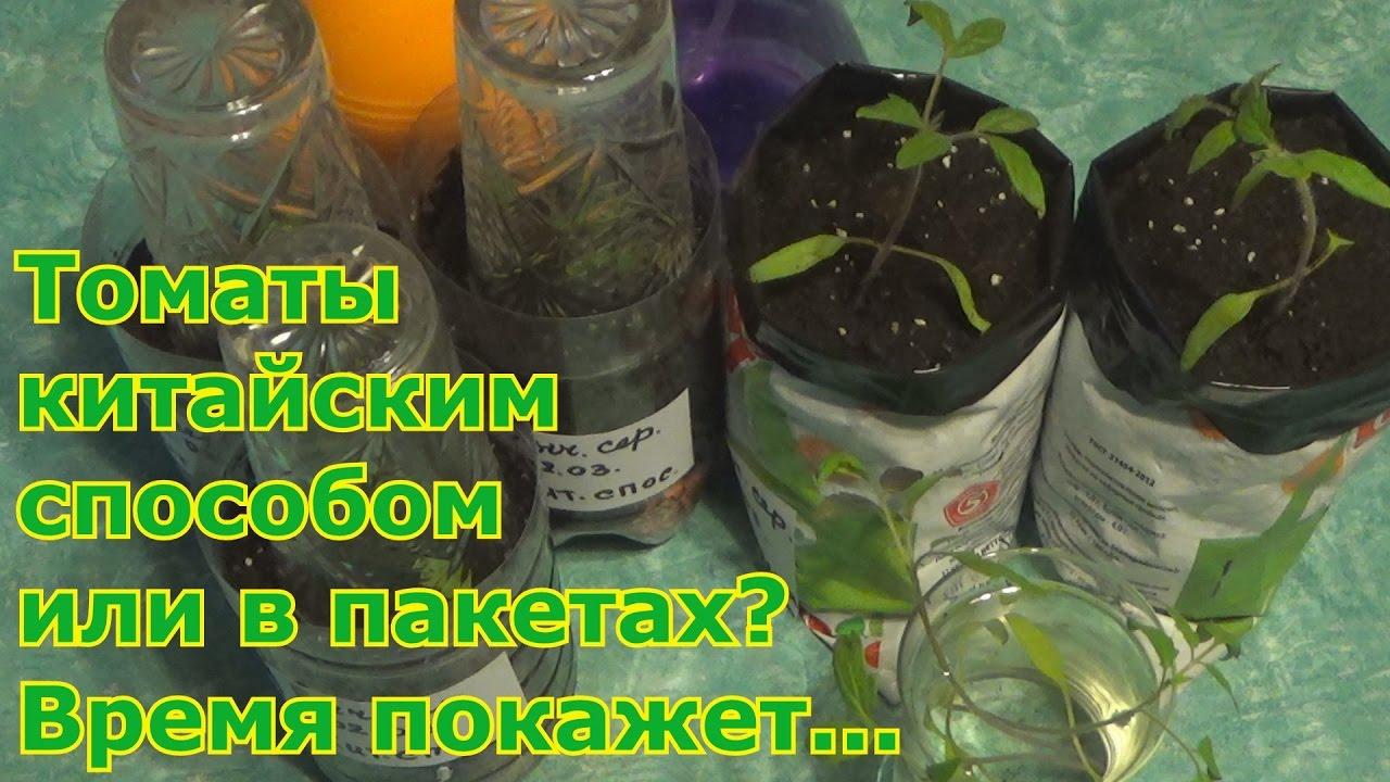 Китайский метод выращивания рассады 30