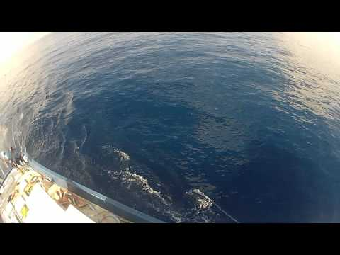 Maldives Tuna Fishing