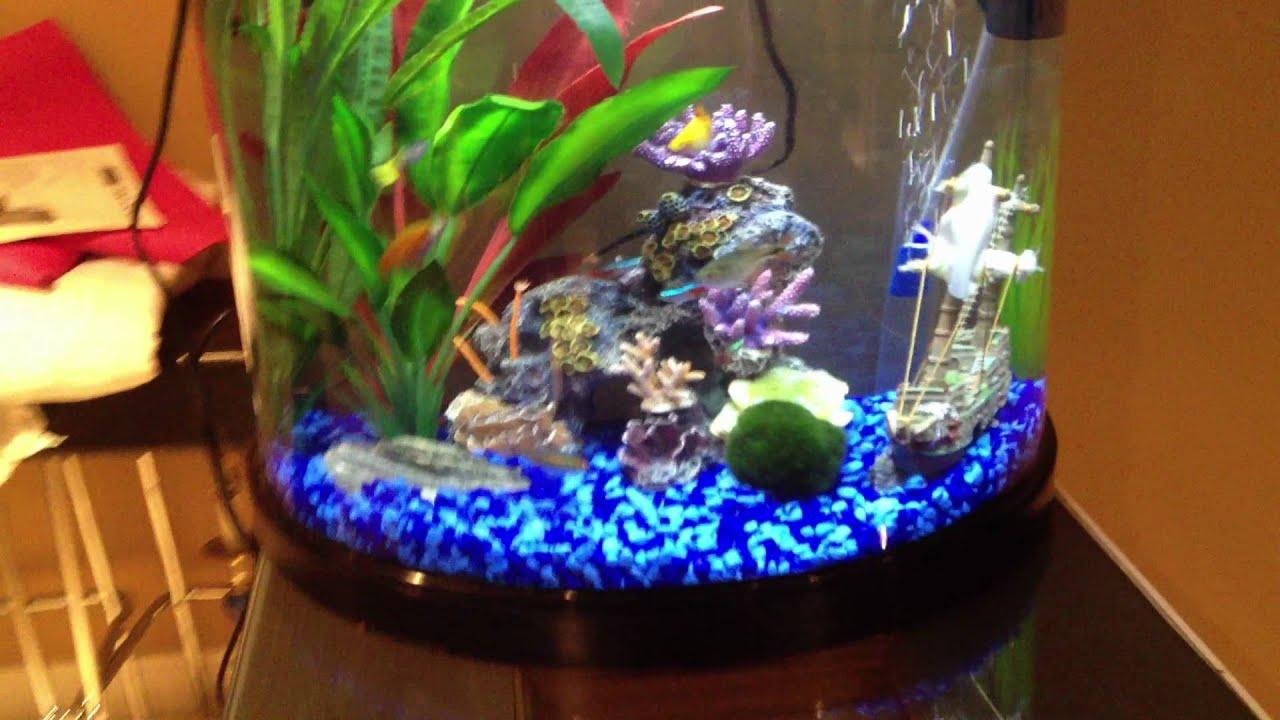 10 gallon fish tank youtube for 10 gallon fish tank stocking ideas