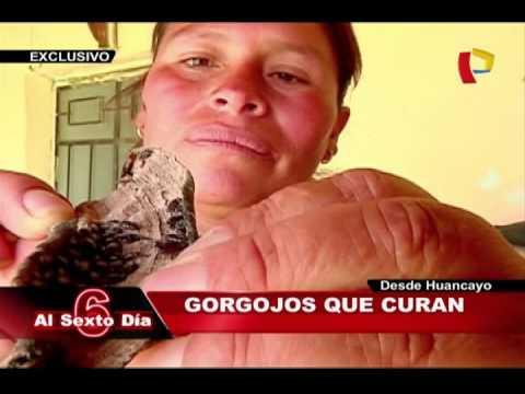 Gorgojos Chinos: Insectos Milagrosos Que Curan Enfermedades