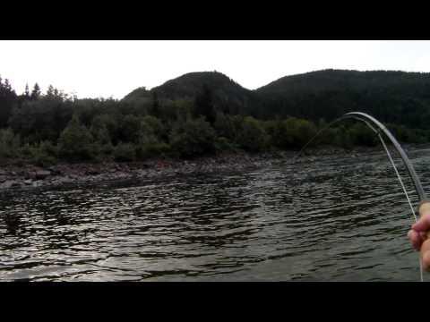 Gaula Salmon 2011 - Manfred Raguse - Norwegian Flyfishers Club
