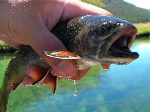 TackleTour - Fishing for Brook Trout in Yosemite