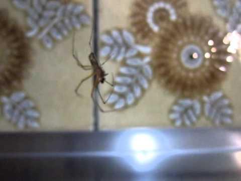 Super Friend Spider Hanging Around