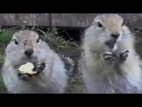 Distraction: Squirrels eat potato chips