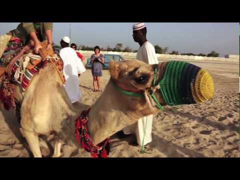 Camels to Skyscrapers: New Travels in Doha