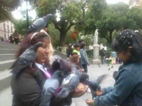 chicharro bolivia