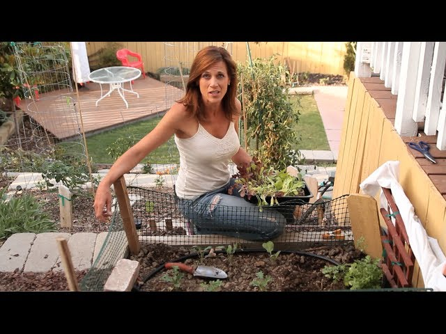 How to Grow Lettuce in Hot Weather - Quick, Easy Tips