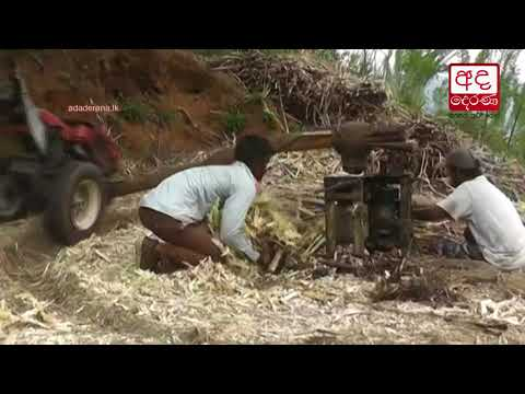 jaggery industry in |eng