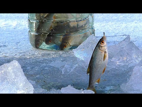 Первая рыбалка на льду 2018. НАКОНЕЦ-ТО! Зимняя рыбалка. Ловля живца для жерлиц на щуку.
