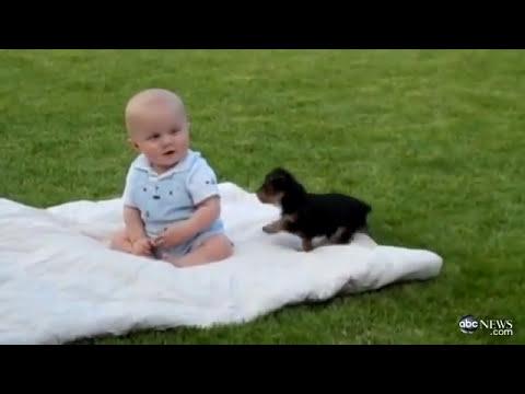 اجمل فيديو على اليوتيوب - طفل يلعب مع كلب