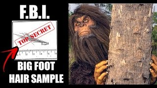 The F.B.I. Releases Evidence Of Bigfoot After 40 Years.