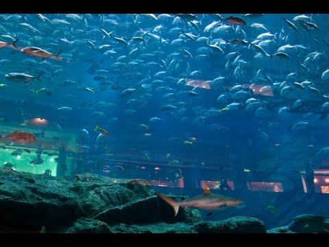 Самый большей  в мире аквариум в Дубае.2 часть.