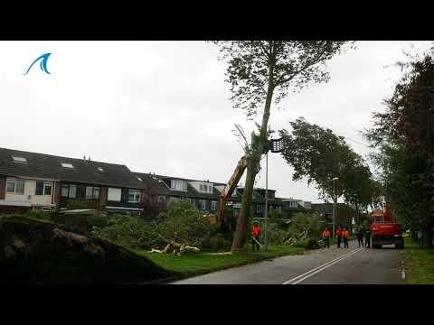 Zuidwal Julianadorp afgesloten, bomen worden preventief gekapt