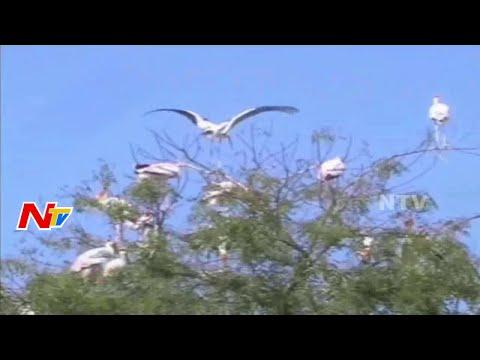 Austrian Cranes in Warangal District || NTV