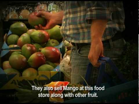"ORGANIC MANGO: ""Europe"" at ITFC in GHANA"