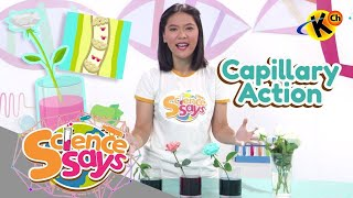 Science Says | Capillary Action